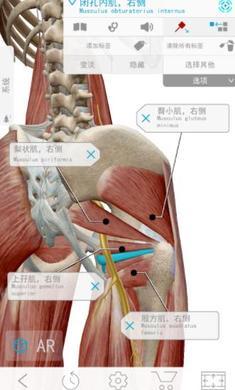 2020人体解剖学图谱安卓版